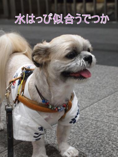 ・搾シ撤7014041_convert_20120702004931