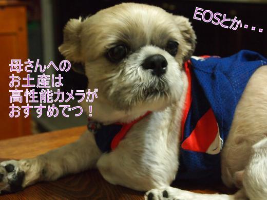 ・搾シ単6253823_convert_20120705024609