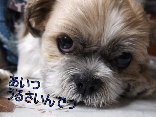 ・搾シ儕7084267_convert_20120710001255