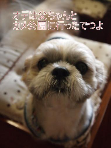 ・搾シ単7124437_convert_20120714010331