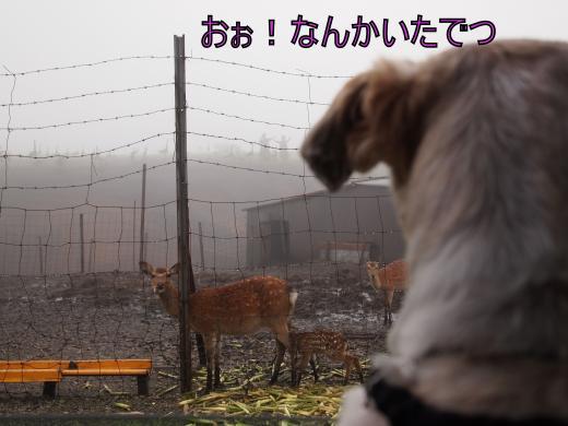 ・搾シ撤7013953_convert_20120712022811