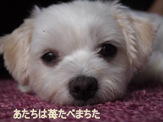 ・搾シ捻7204699_convert_20120724023255