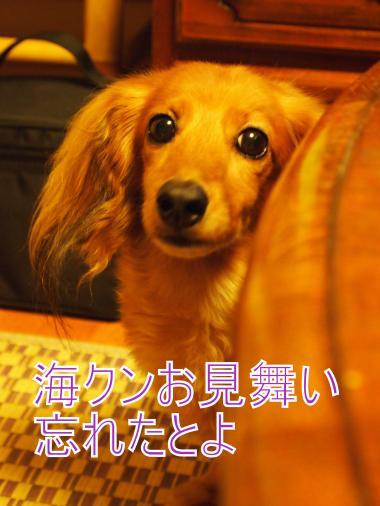 ・搾シ善7224766_convert_20120725235622