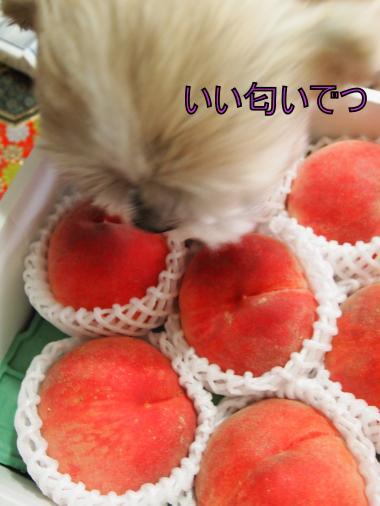 ・搾シ捻8034936_convert_20120803222206