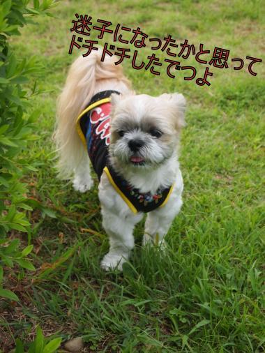 ・搾シ捻7294863_convert_20120805002748