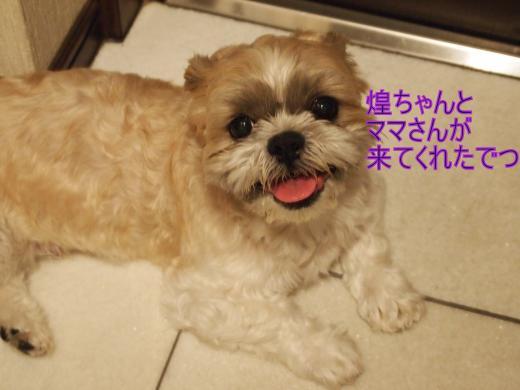 ・搾シ撤8095084_convert_20120810005234