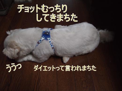 ・搾シ撤7204688_convert_20120812010851