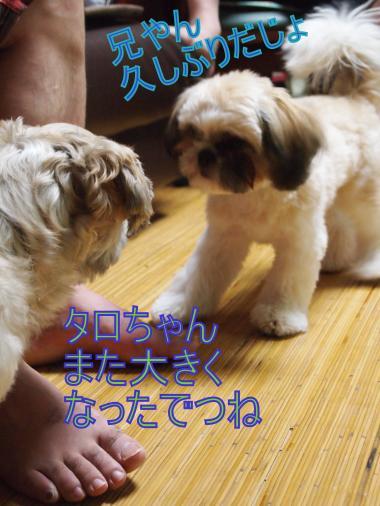 ・搾シ善8135136_convert_20120814013129