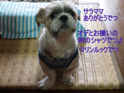 ・搾シ善7144441_convert_20120814005621