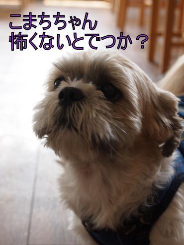 ・搾シ善8075027_convert_20120816140902