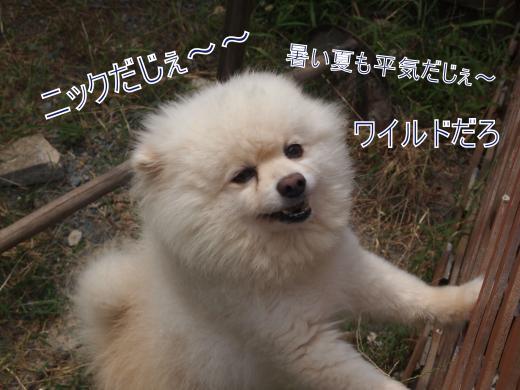 ・搾シ撤8085055_convert_20120816153958