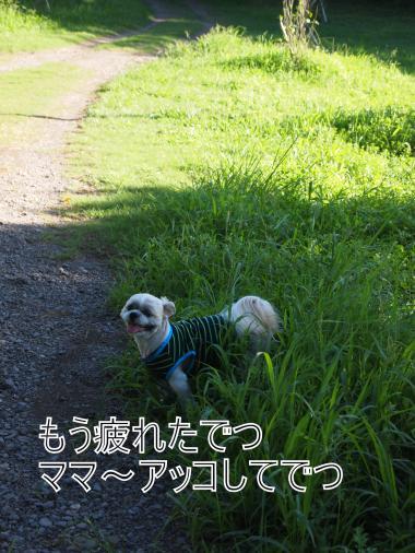 ・搾シ撤8205364_convert_20120823211923
