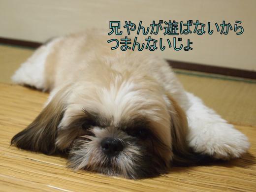 ・搾シ捻8265582_convert_20120829004104
