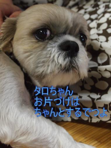 ・搾シ捻8265583_convert_20120829004122
