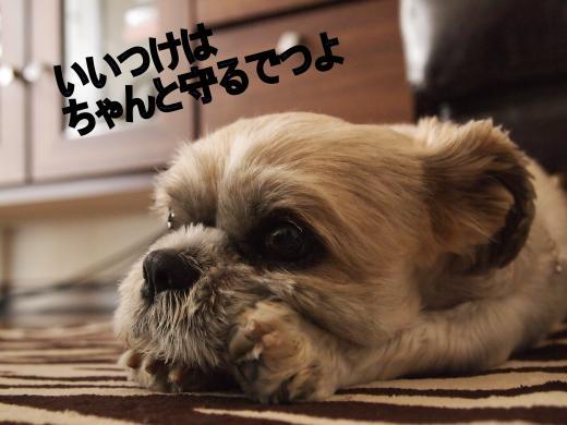 ・搾シ撤6263826_convert_20120831011215