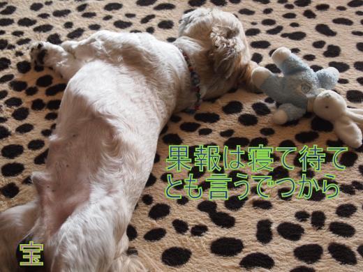 ・搾シ捻9045885_convert_20120905013854