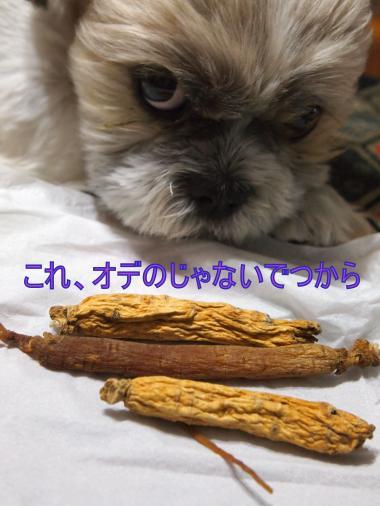 ・撰シ撤9045887_convert_20120905013909