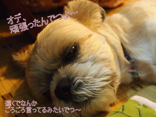・搾シ善9075893_convert_20120908025943