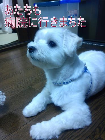 ・搾シ泥VC00091_convert_20120908030014
