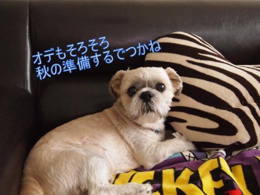 ・搾シ撤9015763_convert_20120914012057