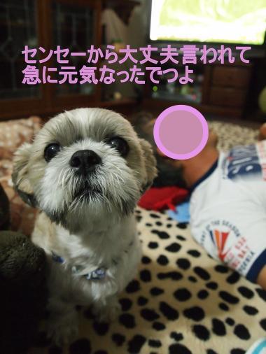 ・搾シ撤9146245_convert_20120914230002