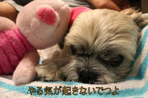 ・搾シ僮MG_0013_convert_20120916225631