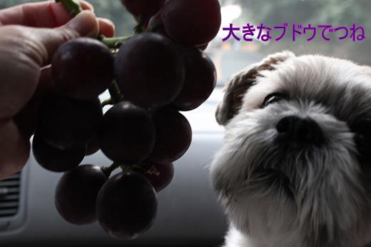・搾シ的MG_0065_convert_20120930222702