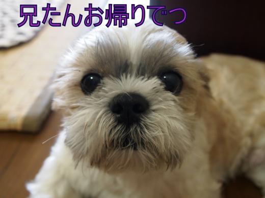 ・搾シ撤8155159_convert_20121006000146