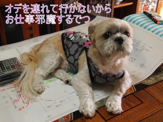 ・搾シ儕9256332_convert_20121006001208