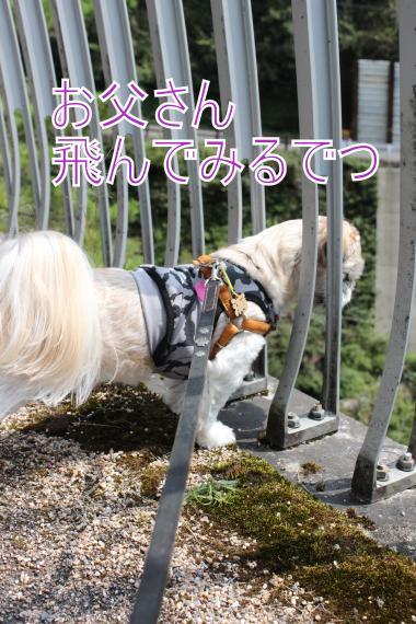 ・搾シ的MG_0115_convert_20121007155940