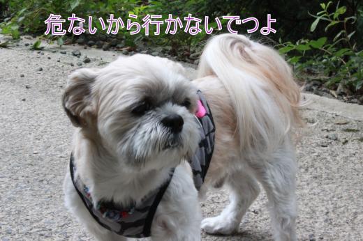 ・搾シ的MG_0063_convert_20121007163652