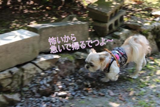 ・搾シ棚MG_0144_convert_20121008204946