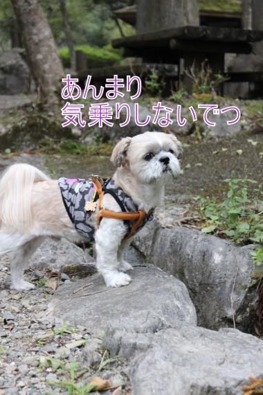 ・搾シ祢MG_0198_convert_20121008205746