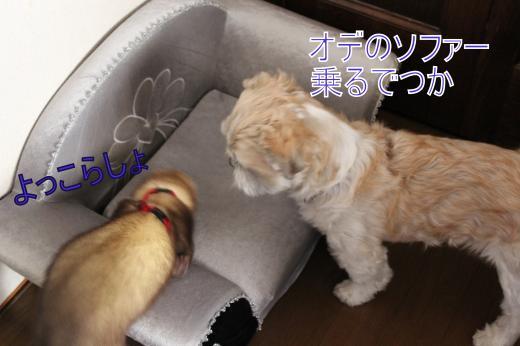 ・搾シ的MG_0564_convert_20121011211909