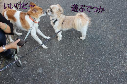 ・搾シ蝕MG_0700_convert_20121016005931