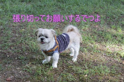 ・搾シ露MG_0248_convert_20121013021250