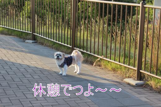 ・搾シ的MG_0387_convert_20121022214407