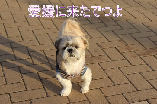 ・搾シ的MG_0390_convert_20121022214425