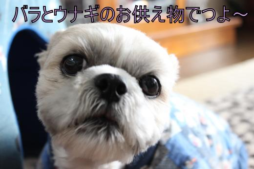 ・搾シ祢MG_0867_convert_20121104210844