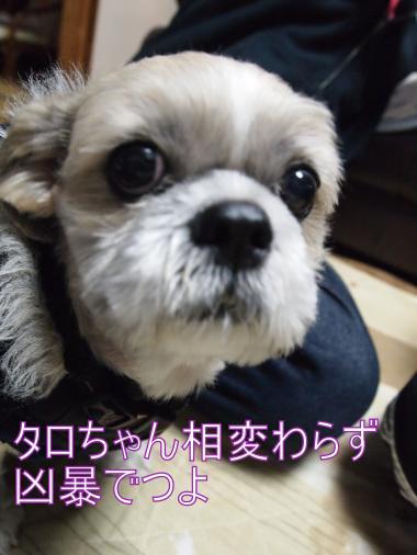 ・搾シ捻B026873_convert_20121106013657