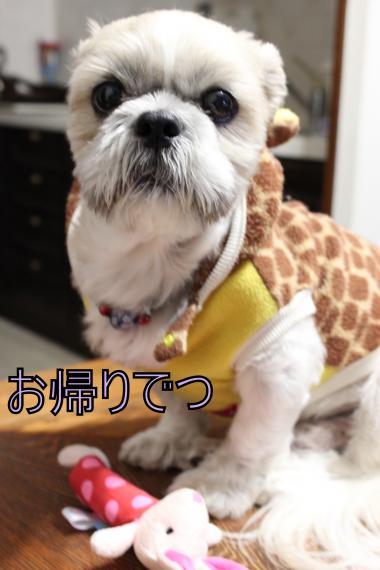 ・搾シ祢MG_1274_convert_20121116210928