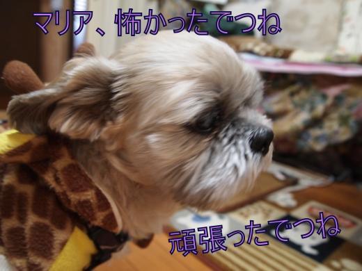 ・搾シ捻B206953_convert_20121122020034