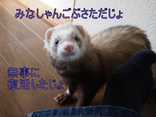 ・搾シ撤B216974_convert_20121123151432