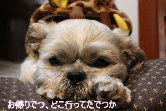 ・搾シ的MG_1281_convert_20121127022753