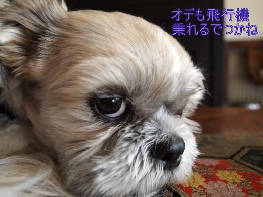 ・搾シ捻B226985_convert_20121128002001