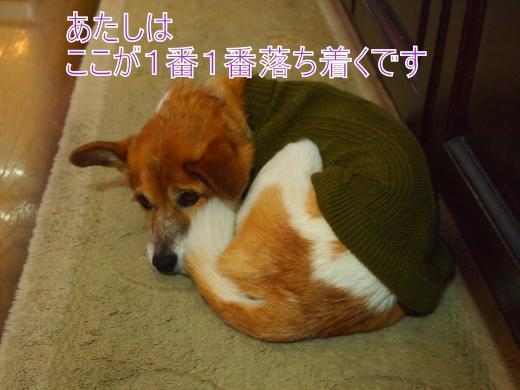 ・搾シ捻C047210_convert_20121205221225
