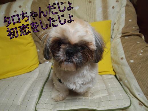 ・搾シ捻C127289_convert_20121214003855