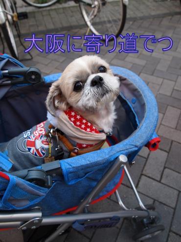 ・搾シ捻C167324_convert_20121225001255