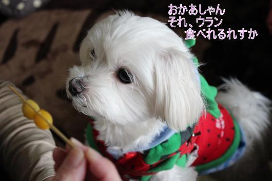・搾シ祢MG_2159_convert_20130103015156