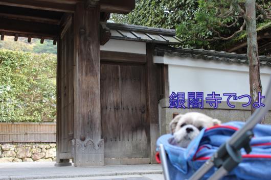 ・搾シ祢MG_1715_convert_20121227024322